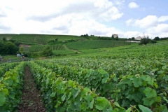 Vignoble - Épernay Champagne Francia 2013
